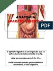 cfakepathaparatodigestivo-090829112343-phpapp02