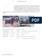 Surti Buffalo From Dairy Farm Guide
