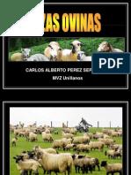 Razas ovejas