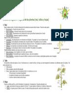 RESUMEN 6 - Órganos de las plantas (raiz, tallo y hojas)