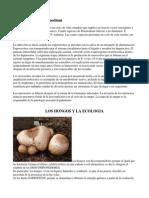 Ciclo de vida del plasmodium.docx