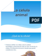 Copia de 1.-Celula Animal