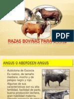 Razas de Bovinos Para Carne