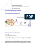 Estruturas Neuroanatomicas Envolvidas Na Drogativacao
