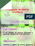 Propagação+de+plantas+frutíferas