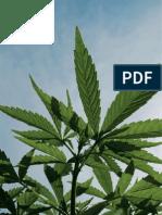 Republica Marihuanera