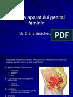 Curs 2 - Infectii Genitale