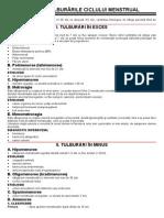 Curs 3 - Ciclul Menstrual.tulburarile Ciclului Menstrual. Fibromul Uterin