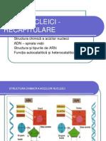 acizii_nucleicirecapitulare