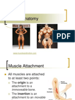 131461370-muscles-of-the-human-body-powerpoint