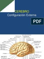 cerebroconfiguracinexterna-100714231548-phpapp01