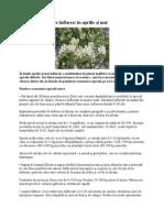 Plante melifere care înfloresc în aprilie şi mai