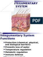 04 INTEGUMENTARY Powerpoint