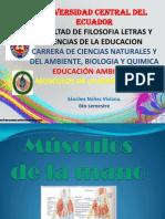 musculosdelamanoybrazo-130509131905-phpapp02.pptx