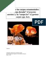 Carassius.pdf