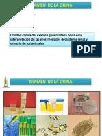 examen orina.pptx