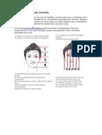 PROPORCIONES DEL ROSTRO.docx