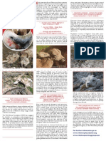 wsf disease brochure