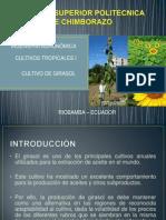 TROPICALES I CULTIVO DE GIRASOL.pptx