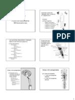 motricite_2.pdf