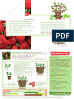 Strawberries - Organic Growing Guides for Teachers + Students + Schools