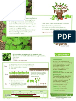 Coriander - Organic Growing Guides for Teachers + Students + Schools