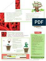 Chillies - Organic Growing Guides for Teachers + Students + Schools