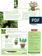 Chard - Organic Growing Guides for Teachers + Students + Schools