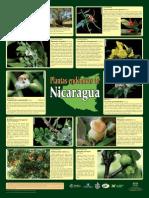 Plantas Endemicas Nicaragua Afiche