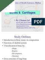 Bones & Cartilages by CK