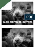 Volante ¡Los animales sufren!