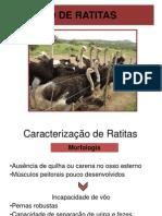 aula 1-CRIAÇÃO DE RATITAS