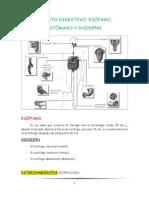 Aparato Digestivo Tema 12