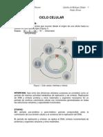 Guia teórico  de division celular