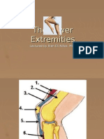 The Lower Extremities