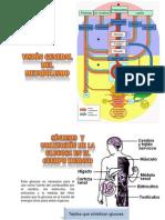 14 Metabolismo de Carbohidratos03