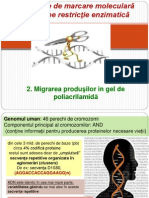Restrictii Enzimatice Si Migrarea in Poliacrilamida