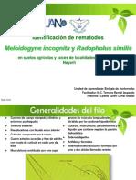 Identificación de nematodos