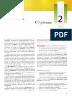 2 Citoplasma
