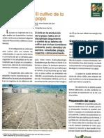 El Cultivo de la papa [en Guatemala]