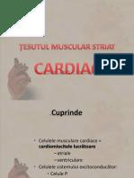 Tesut Muscular 2- 2013