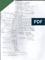 Appunti Di Anatomia II - Neuroanatomia di Emiliano Bruni