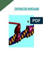 Contractia Musculara Biomecanica MG 2012-2013 Prez Pp