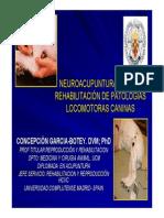 Neuroacupuntura_patologias_caninas