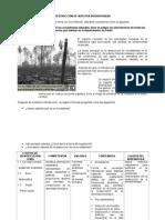 1. Estrategia Matematica Primero Basico Biodiversidad