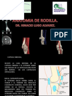 Anatomia de Rodilla Power Point
