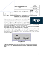 Guia 4 Ciencias Noveno Acidos Nucleicos