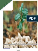 Informe_pellets2011