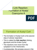 4. Formation of Acetyl Coenzyme a PPT3