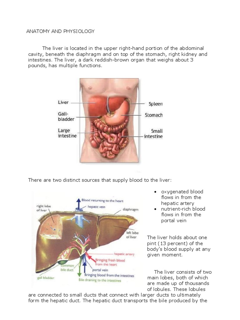 Anatomy and Physiology-liver